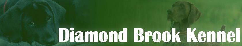 Diamond Brook Kennels